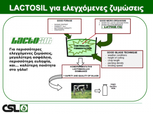 lactosil01